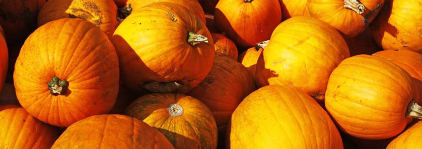 Storing Pumpkins Harvest
