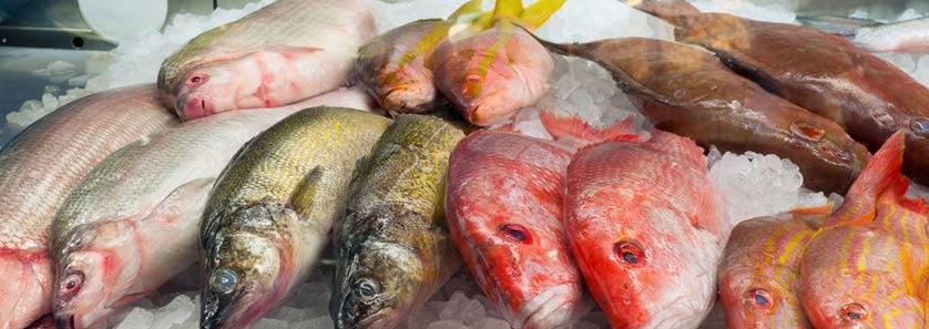 Ice Fish Temperature