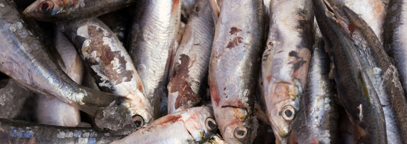 Image gallery spoiled fish for Does fish oil expire